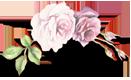 rose-trenner-klein.png